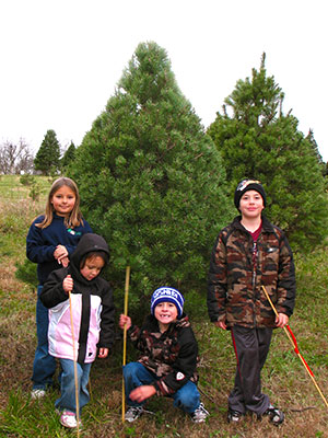 Pick-your-own Christmas Trees at Pleasant Ridge Farm in Ranoul, Kansas.