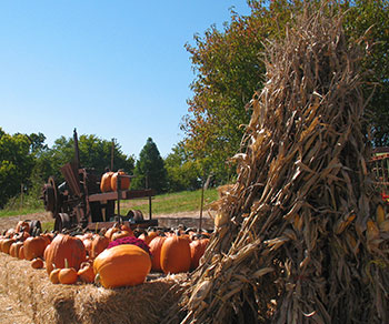 Pumpkins, Corn, and Hay galore at Pleasant Ridge Farm in Ranoul, Kansas.