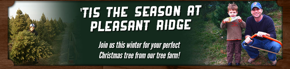 Choose and Cut Christmas Trees at Pleasant Ridge Farm